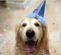 Dog party! Welcome!